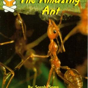 Amazing Ant  神奇的螞蟻